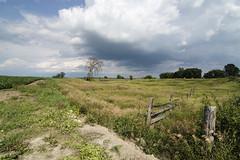 hee haw hills (Barbara A. White) Tags: woodlawn ontario stormclouds farmland splitrailfence tree landscape canada