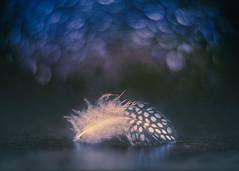 Lightness (RoCafe) Tags: pentacon pentacon50mmf18 feather bokeh stilllife nikond600
