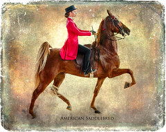 The American Saddlebred (klick4) Tags: americansaddlebred horse animal rider english