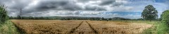wheat panorama.. (bluebell girl) Tags: panorama westcountry village northsomerset nature farming field crop wheat landscape england canong12 cleeve