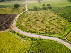 The Curve (cvnguyenphoto) Tags: vietnam chuc angiang tp tritn fromabove grass farmer ecology agriculture paddy fields paths road bicycle phantom dji countryside aerial trees yellow green peaceful rural rice