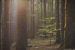 Giocando a nascondino nelle foreste Casentinesi (Matteo Rinaldi.it) Tags: alberi bosco forestecasentinesi stampa relax nascondino albero