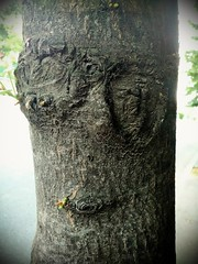 Eyes without a face (SocialFloTribute) Tags: treetrunk nature beautiful photography garden