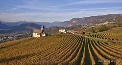 Sdtirol (Rolandito.) Tags: italy alto adige sdtirol italia italie italien vineyard weingut vigne weinberg