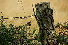 Strainer post. (artanglerPD) Tags: strainer post barbed wire grasses plants nettles ferns rusty flaking