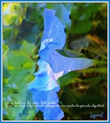 Artsy Morning Glory (Lynn English-away) Tags: poetography morningglory blue garden ps