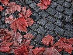 Autunno (fauglia2003) Tags: autunno foglie circolo