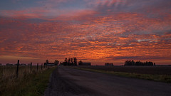Coloured (jarnasen) Tags: fujifilmxt1 handheld freehand morning dawn sunrise september road dirtroad fence sky clouds nordiclandscape landscape sttuna sverige sweden farmland nature outdoor xt1 fuji xf1024mm wide pov 1024mm