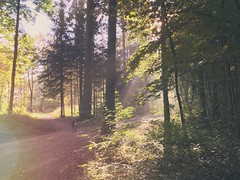 Stories (FlavioSarescia) Tags: dog iphone sun sunshine sunrays sunbeam mextures autumn sunlight light wald bume sonnenschein hund nature landscape