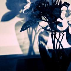 Trasparenze di vetro (stendol [L.B.W.L.]) Tags: vetro ombra ombre vaso riflessi trasparenze glass transparencies stilllife