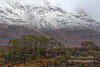 Torridon Pines (Shuggie!!) Tags: grasses hdr highlands landscape mountains pine rocks scotland snow torridon trees westerross zenfolio karl williams karlwilliams