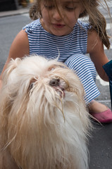 upper west side (Charley Lhasa) Tags: ricohgrii grii 183mm 28mm35mmequivalent iso400 secatf28 0ev aperturepriority pattern noflash r009769 dng cropped taken161001155818 uploaded161003215152 4stars flagged adobelightroomcc20157 lightroomcc20157 adobelightroom lightroom charley charleylhasa lhasaapso dog people peoplemet hello street crosswalk intersection upperwestside uws manhattan newyorkcity nyc newyork ny tumblr161003 httpstmblrcozpjiby2cxhy8e