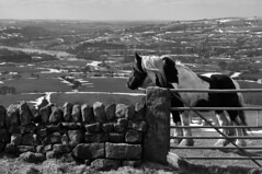 Horse on the Roaches (Dead Pan) Tags: horse snow hills leek staffordshire roaches