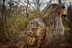 Wooden Eagle (Lea- Marie) Tags: trees sculpture nature water wooden moss eagle wildlife bogs risley deforestation mossland