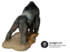 Gorilla (Quagga Sculpture) Tags: justin sculpture black public glass valencia acdc fire model eyes paint artist with gorilla very outdoor metallic wildlife double structure metallica layer and beatles polyester to areas resin perry ketty internal silicone conditions in plasticine moulded modelmaker quagga retardant resistant hyperrealist beringei bioparc ramonlopez bibier