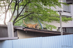 Today's Cat@2013-04-11 (masatsu) Tags: cat canon catspotting thebiggestgroupwithonlycats powershots95