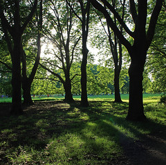 trees in the townforest (Phlipp D) Tags: trees light shadow tree green forest licht cologne kln grn wald schatten baum platinumpeaceaward mygearandme mygearandmepremium mygearandmebronze