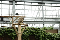 Kobe Kachoen (ddsnet) Tags: travel bird birds japan zoo sony birding 99 raptor  nippon kansai  birdwatching nihon slt birdofprey backpackers        bird    zoo zoobird    kobekachoen hygoken     kbeshi    birdwatchinginjapan  singlelenstranslucent 99v