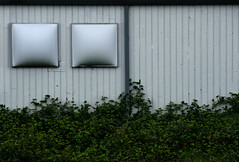 walleyes (dotintime) Tags: fish green eye wall vines growth blink walleye meganlane dotintime