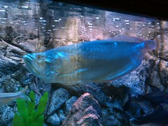 (7439946) Tags: fish may    2013