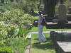 IMG_0574 (ceztom) Tags: city trip roses plant cemetery rose by garden square with native cemetary hamilton visit betty historic rivers april sacramento 20 davis speech 19 rosegarden cezanne perennials opengardens kathe cez 1000broadway april20 2013 930–200