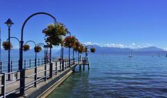 Débarcadère de Morges (Diegojack) Tags: nikon nikonpassion d7200 paysages léman lac débarcadère morges fleurs