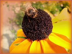 """""""Ein Platz an der Sonne !"""" - Vorfreude, der Sommer kommt zurck !  - in meinem Garten :-)) (:SARA_be:) Tags: vorunseremhaus saariysqualitypictures"""