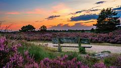 Heidelandschaft (jwfoto1973) Tags: heide heath heidelandschaft niederlande niederrhein nederland sonnenuntergang sunset landschaft landscape johannesweyers nikon d7100 verlaufsfilter