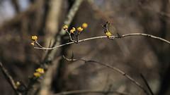 Tavasz / Spring (Gellrt-hegy) (bencze82) Tags: budapest hungary magyarorszg canon eos 700d tavasz spring voigtlnder apolanthar 90mm f35 slii gellrthegy