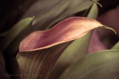 Fuji x-t10 50mm (Jasrmcf) Tags: fuji fujinon fujifilm fujixt10 fujimacro macro dof bokeh bokehlicious bokehgraph 50mm carlzeiss beautiful flowers flower green pink smooth blur