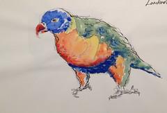 Rainbow Parakeet (oxlade134) Tags: rainbowlorikeet scotlandisland nsw australia