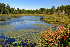 Beaver Dam (Lindaw9) Tags: beaver pond dam treeline lily pads sky water reflections northern ontario