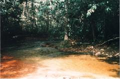 006 (bernardobath) Tags: digital analog xpro amazonas wild forest guas riacho crrego floresta intothewoods