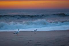 walking gull-0064 (kendrajwp) Tags: asbury asburypark beach february2016 ocean sunrise
