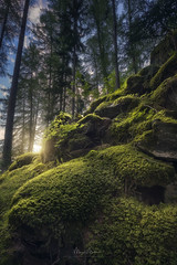 Hiding place of the Dwarves (Manuel.Martin_72) Tags: green summer nikon d810 switzerland valmstair graubnden alps swissalps enchanted fairytale sunrise forests grass leaves moss rocks stones trees woods sunrays