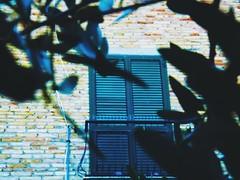 (Luca3803) Tags: railings railing ringhiere ringhiera plants piante painta plant tree albero ulivo persiana blind persiane blinds balcone balcony mattone brick mattoni bricks finestra window italia italy