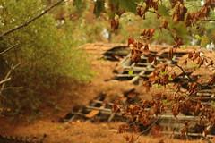 Nature (October Fireflies) Tags: vigo galicia espaa spain galiza pontevedra baiona bayona canido trace tricking tracetricking october octoberfireflies fireflies nature cabing woods forest