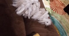 How do you deal with shedding? via http://ift.tt/29KELz0 (dozhub) Tags: cat kitty kitten cute funny aww adorable cats