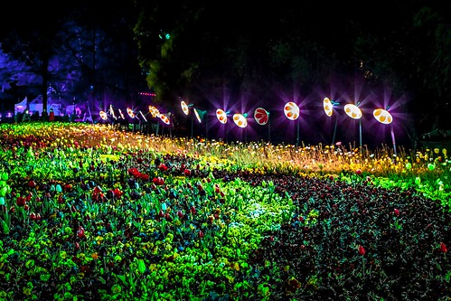 Floriade At Night-19