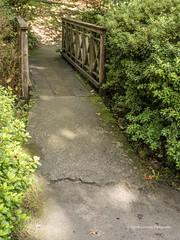 Clyne Gardens 2016 09 30 #28 (Gareth Lovering Photography 3,000,594 views.) Tags: clyne gardens botanical swansea wales flowers trees shrubs park olympus stylus1s garethloveringphotography