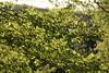_DSC6340 (nonesmanneslond) Tags: slovenia slovene kitnivhr