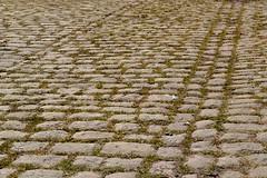 Cobbles at Barton (Duane Jones Cheshire1963) Tags: green grass yard manchester moss floor line barton cobbles setts