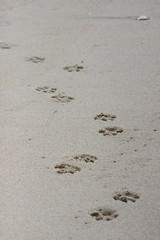Tracks (historygradguy (jobhunting)) Tags: beach newjersey sand tracks nj footprints jersey prints jerseyshore pawprints manasquan