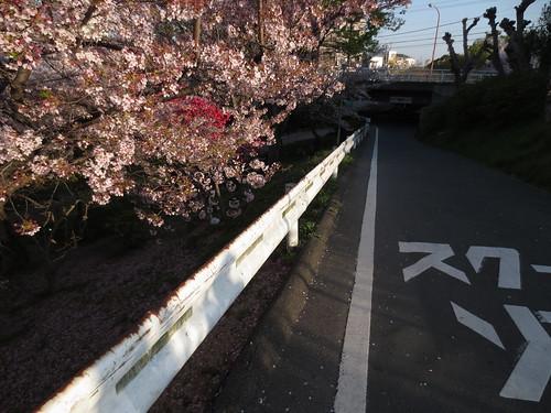 落花の坂道