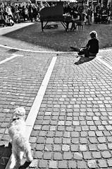 Silenzio di Silenzi (bebo82) Tags: people blackandwhite bw dog cane square pentax piano persone ljubljana piazza biancoenero pianoforte lubiana pentaxk20d pentaxk20 klavierkunst