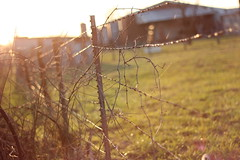 Fence in the Evening (Pics by Abigail) Tags: lighting sunset field canon fence buildings evening wire vines weeds midwest country rustic rusty pasture barbedwire barbed goldenhour fenceposts 50mm18