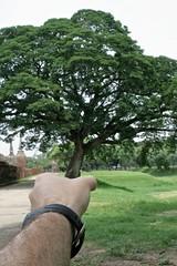 l'arbre dans la main (tonthieum) Tags: nature canon aperture dof hand main arbre feuilles feuille 18mm montre touriste chaleur thailande thailand tonthieum