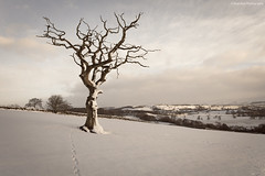 The Eden Valley (.Brian Kerr Photography.) Tags: winter snow tree cumbria 1740mm penrith edenvalley canon1740mm canoneos5dmkii