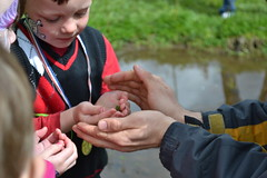 Jason letting guests hold onto a Pacific Chorus Frog. (BCWF Wetlands Education Program) Tags: bc britishcolumbia environmental wetlands restoration langley wetland citizenscience bcwf townshipoflangley langleyenvironmentalpartnerssociety pacificchorusfrogs