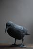 probably crow time (postbear) Tags: crow crows bird berd burd birds probablycrowtime black plastic corvid intelligence pet playchesswithpigeons destroycraigslist robfordisanasshole formermayorrobfordlikescottaging foundoutreadingisdifficult likeallbulliesrobfordisachickenshitcoward helpourformermayorisastupidclown marywalshformayororprimeminister call911theformermayorsbeatinghiswifeagain robfordhasneonazisforfriends robfordisadisgustingfuckingthief robfordisastupidbitch robfordasshole robfordsexuallyassaultswomen robfordisafraidofeverything robfordisalyingsackofshit robfordandstephenharperaredisgustingbigots richwhiteconservativesbuyjusticeyetagain allconservativesarefilth thenewmapfunctionisterrible thenewuploaderisalsoterrible